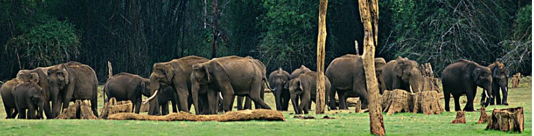 12930194073864_kerala-wildlife.jpg